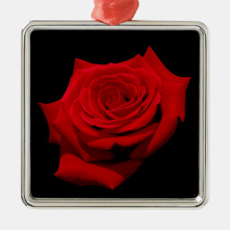 Red Rose on Black Background Silver-Colored Square Decoration