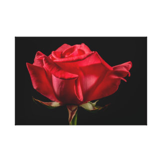 """Red Rose on Black Wrapped 24"""" x 16"""" Canvas Print"""