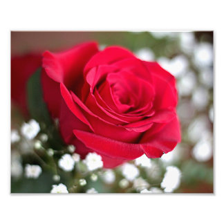 Red rose photo print
