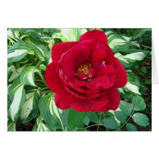 Red Rose & Varigated Hostas Card