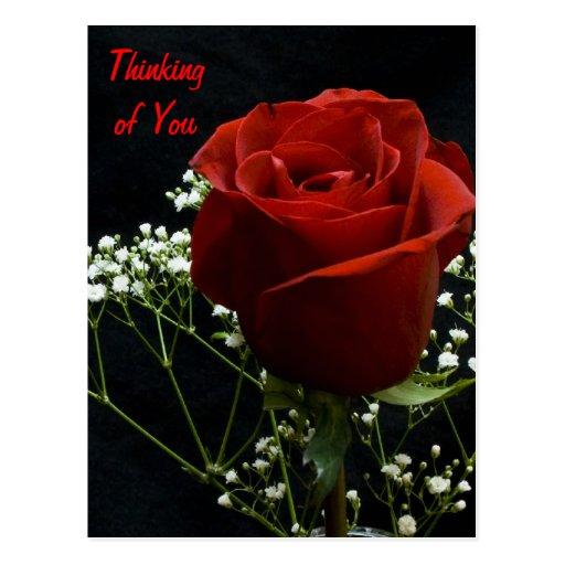 Red Rose Verticle Postcard