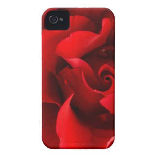 Red Rose w/ Dew Drop on White Template- Customized iPhone 4 Covers