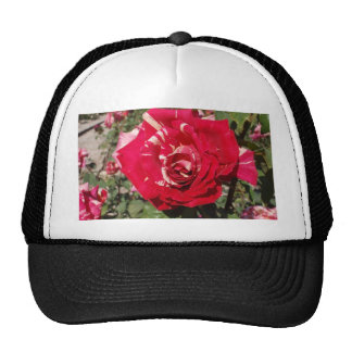 Red Rose With A Splash Of Cream Trucker Hats
