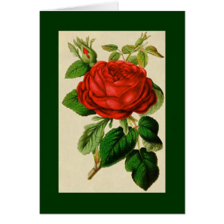 Red Rose With Buds NOTE CARD DKGR