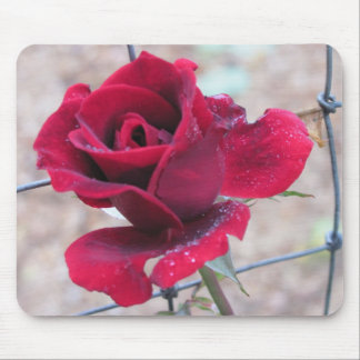 Red Rose with dew Mouse Pad
