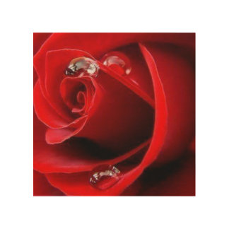 Red Rose With Water Drops Wood Wall Art