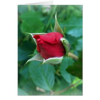 red rosebud card