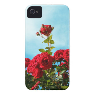 Red roses against blue sky iPhone 4 case
