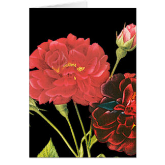 Red Roses and Bud Cards
