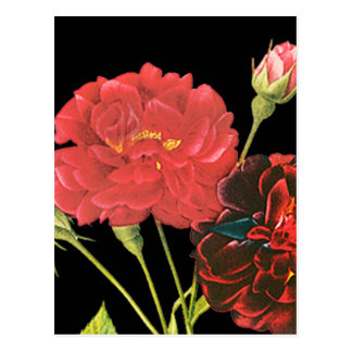 Red Roses and Bud Postcards