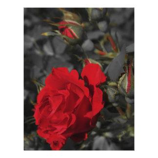 red roses bloom scroll on dark gray 21.5 cm x 28 cm flyer