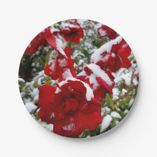 Red roses covered by snow and rime paper plate