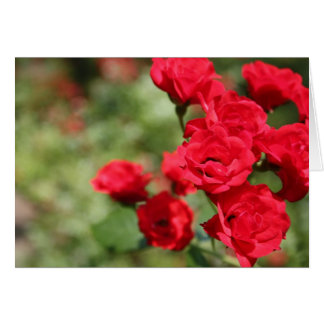 Red Roses Fade Into Focus Notecard