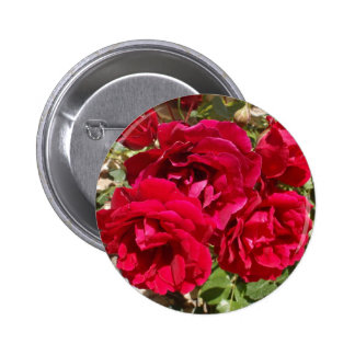 Red Roses In Bloom Pinback Button