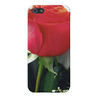 Red roses iPhone 5/5S cases