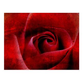 Red Roses Macro. Postcard