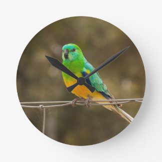 Red-rumped Parrot Round Clocks