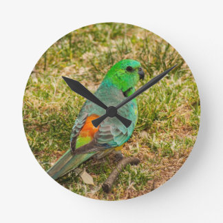 Red Rumped Parrot Round Clocks