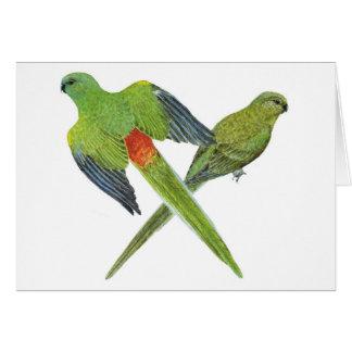 Red-rumped Parrot Pair - Psephotus haematonotus Greeting Card
