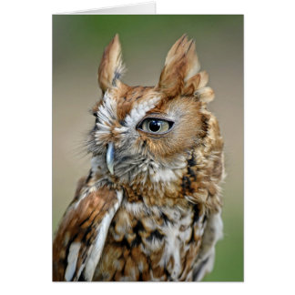 Red Screech Owl Card