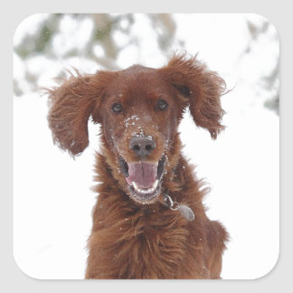 Red Setter Square Sticker