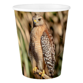 Red Shouldered Hawk in a tree Paper Cup