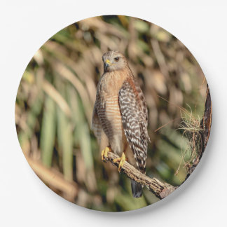 Red Shouldered Hawk in a tree Paper Plate