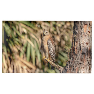 Red Shouldered Hawk in a tree Place Card Holder