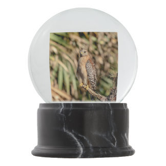 Red Shouldered Hawk in a tree Snow Globes