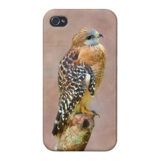 Red-Shouldered Hawk iPhone 4/4S Cases