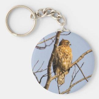 Red-shouldered Hawk Keychains