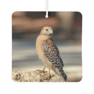Red Shouldered Hawk on a rock Car Air Freshener