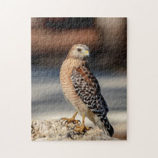 Red Shouldered Hawk on a rock Jigsaw Puzzle