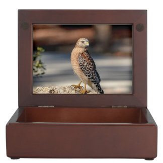 Red Shouldered Hawk on a rock Keepsake Box