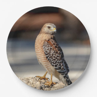 Red Shouldered Hawk on a rock Paper Plate