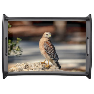 Red Shouldered Hawk on a rock Serving Tray