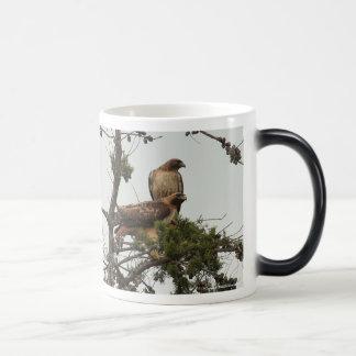 Red-shouldered Hawks Mug