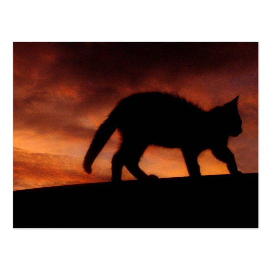 red sky cat postcard