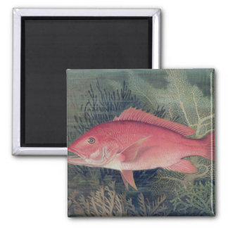 Red Snapper from Game Fishes of the United State Refrigerator Magnet