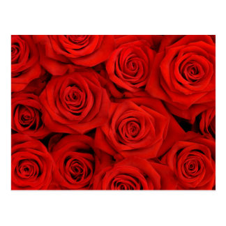 Red Spectacular Roses Postcard