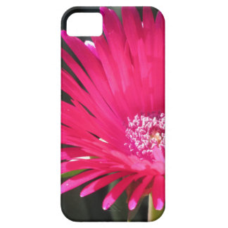 Red Spike Ice Plant Bloom Case For The iPhone 5
