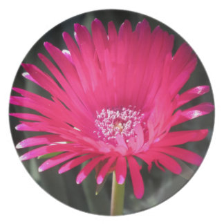 Red Spike Ice Plant Bloom Plates