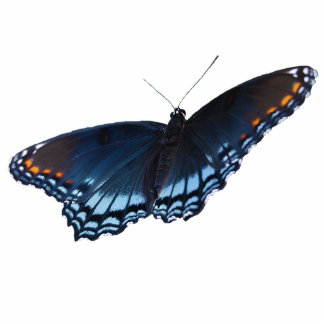 Red-spotted Purple Butterfly pin Photo Sculpture Badge