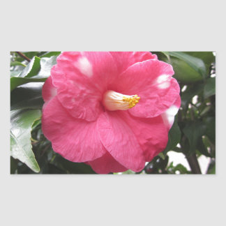 Red spotted white flower of Camellia Marmorata Rectangular Sticker