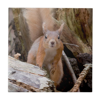 Red Squirrel Ceramic Tile