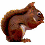 Red Squirrel Christmas Hanging Acrylic Photo Cutout