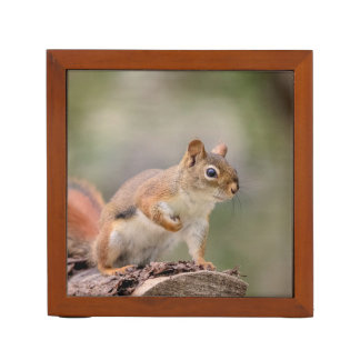 Red Squirrel Desk Organiser