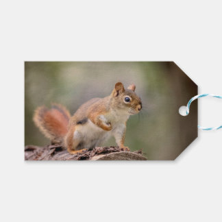Red Squirrel Gift Tags
