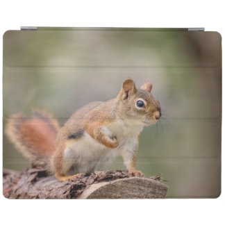 Red Squirrel iPad Cover
