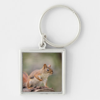 Red Squirrel Key Ring
